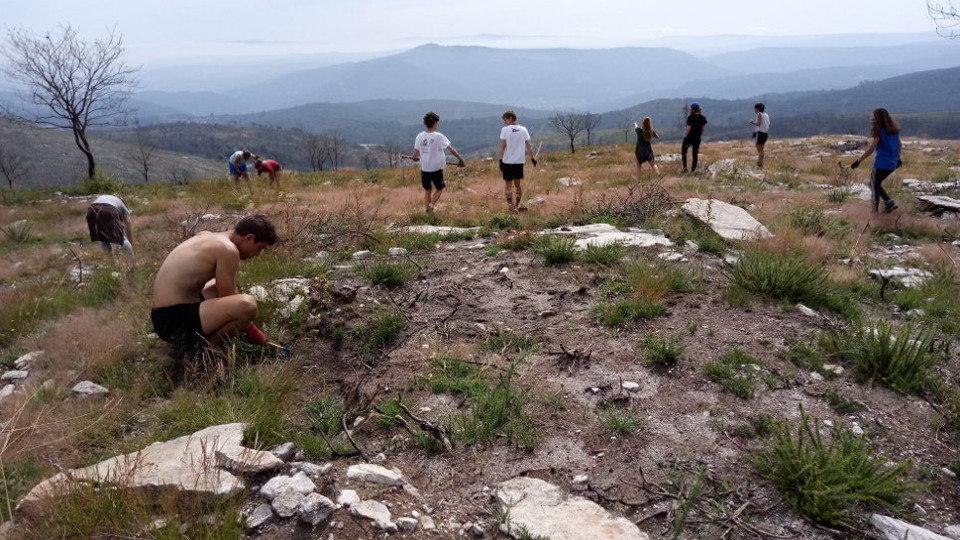 Amigos da Terra continua con novas accións de voluntariado forestal nos montes queimados de Tourón