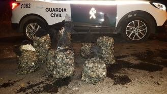 Almeja incautada en Vilaboa. GUARDIA CIVIL