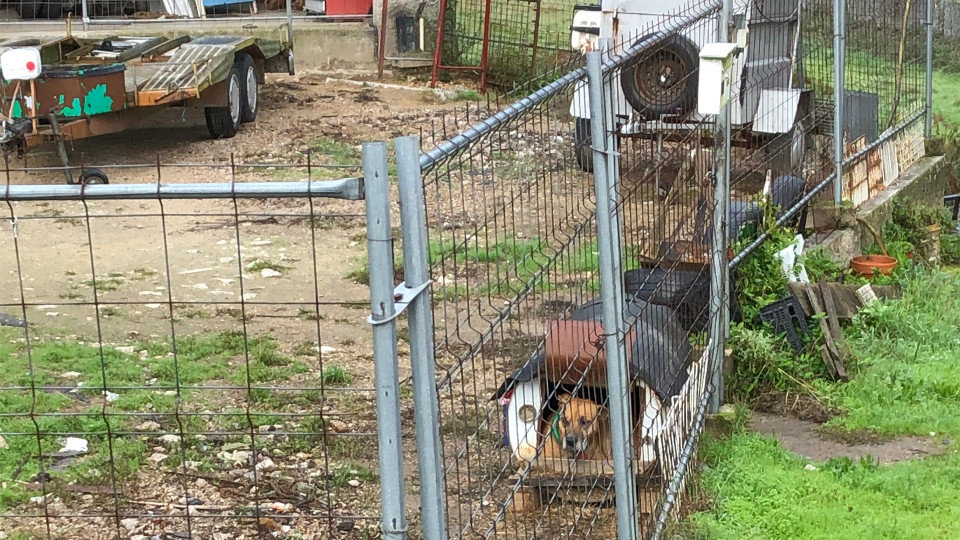 Denuncian la existencia de cuatro perros encadenados entre escombros en Barro